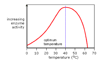 Temperature for enzymes